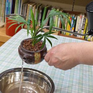 急須内の水量を調整したり、植物を植えたまま水の交換ができます。