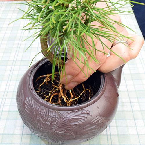 松を設置する向きと位置を決め、スプーンなどで、コーンを周りに詰める